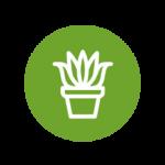 cultiver la plante d'aloe vera